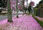feliz primavera