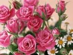 receba as rosas