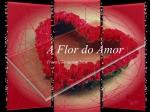 a flor do amor  2