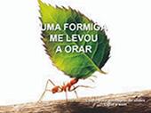Aprendendo a orar com as formigas
