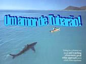 Um amor de tubarão