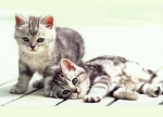 a vida secreta dos gatos