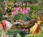 flores da paixão