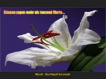 serenata com lindas flores