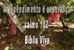 biblia viva salmo 102 socorro