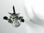 já fui um gato