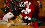 neste natal desejo