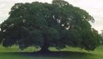 mensagem árvore
