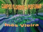 campos floridos a perfumar