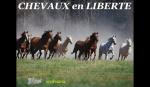 cavalos em liberdade