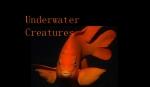 criaturas da água