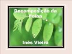 decomposição da folha