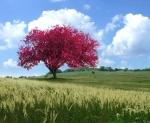 dia da Árvore 2