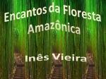 encantos da floresta amazônica