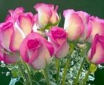 estão voltando as flores veraluzia