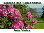 floracao dos rododendros
