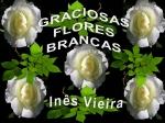 graciosas flores brancas