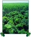 nossas florestas