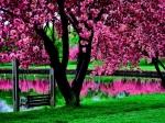 paisagens em rosa
