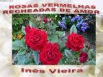 rosas vermelhas recheadas de amor