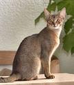 curiosidades e raças de gatos