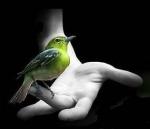 os passarinhos e as mãos