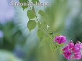 Sintonize jesus