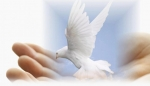 mensagem paz na terra