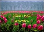 Plante boas sementes