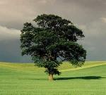 a fabula das três árvores