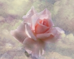 a história de rosa