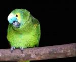 a liberdade do papagaio