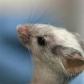 a li��o do rato