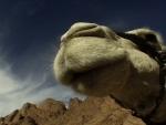 a mamae camelo