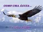 como uma aguia