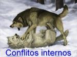 conflitos internos