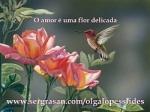 o amor e uma flor delicada