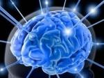 o nosso cerebro e doido