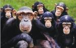 você e descendente do macaco