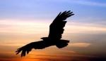 a liberdade é