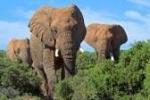 a história dos cegos e do elefante