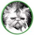 o gato feio